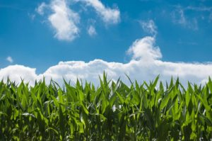 Southwestern Ontario is home to some of the best farmland in the world.