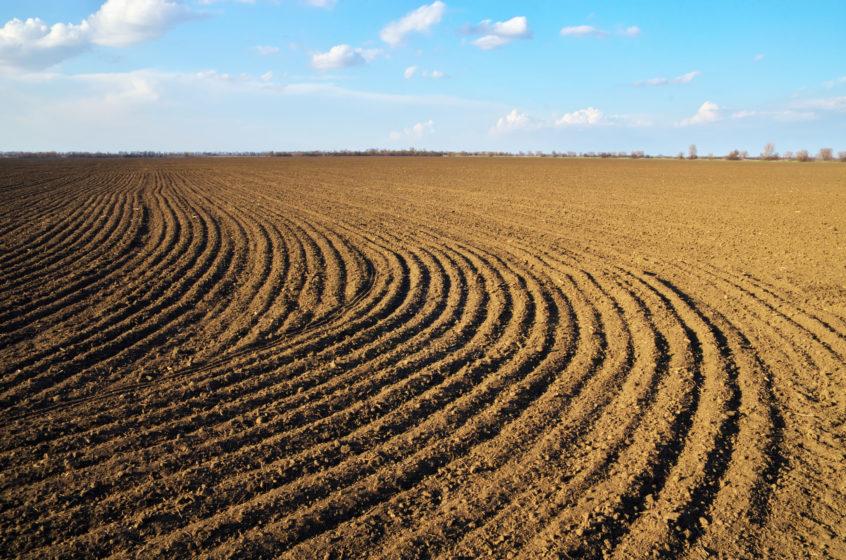 field of dirt