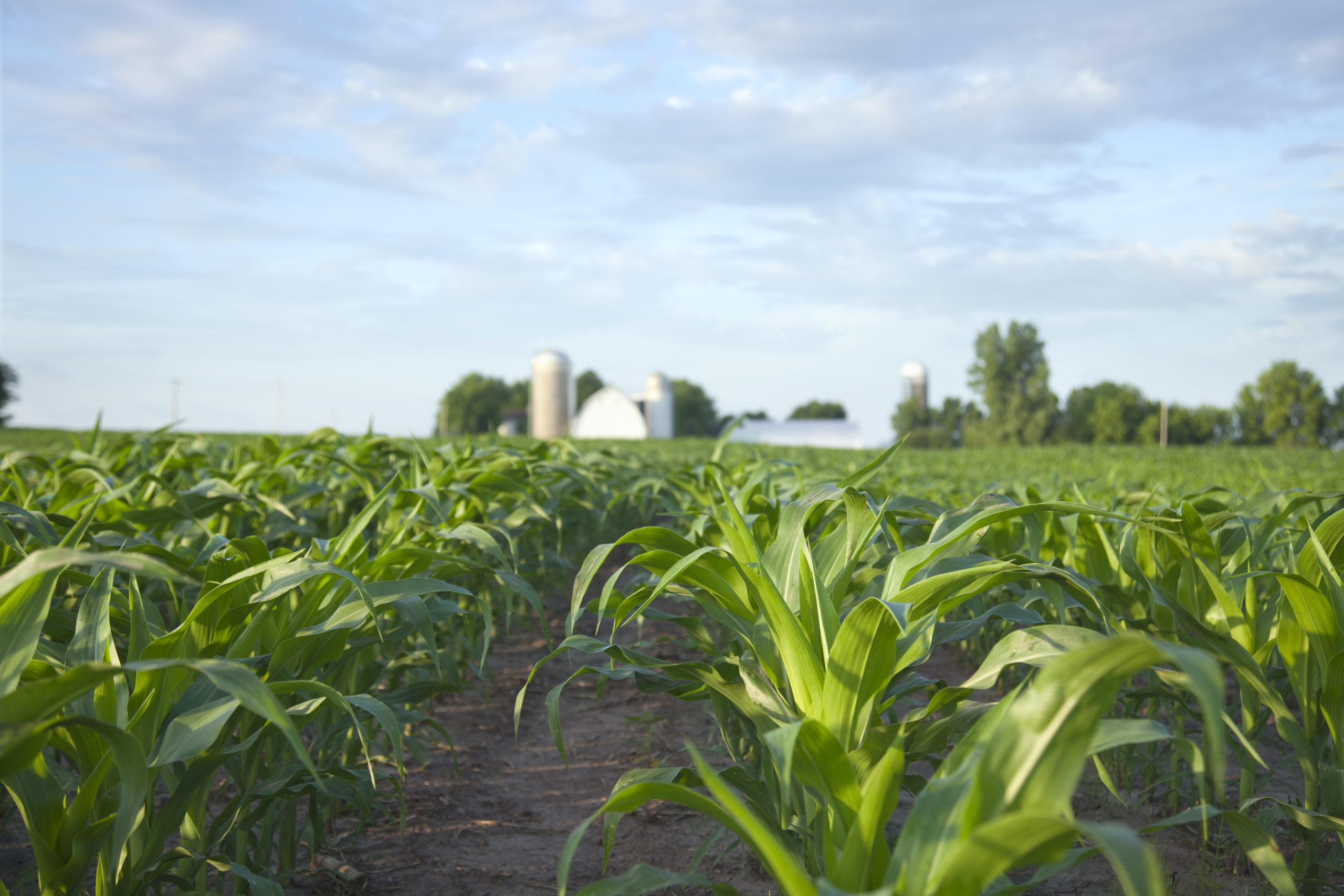"""Featured image for """"Canada's farm incomes on track for a record year"""""""