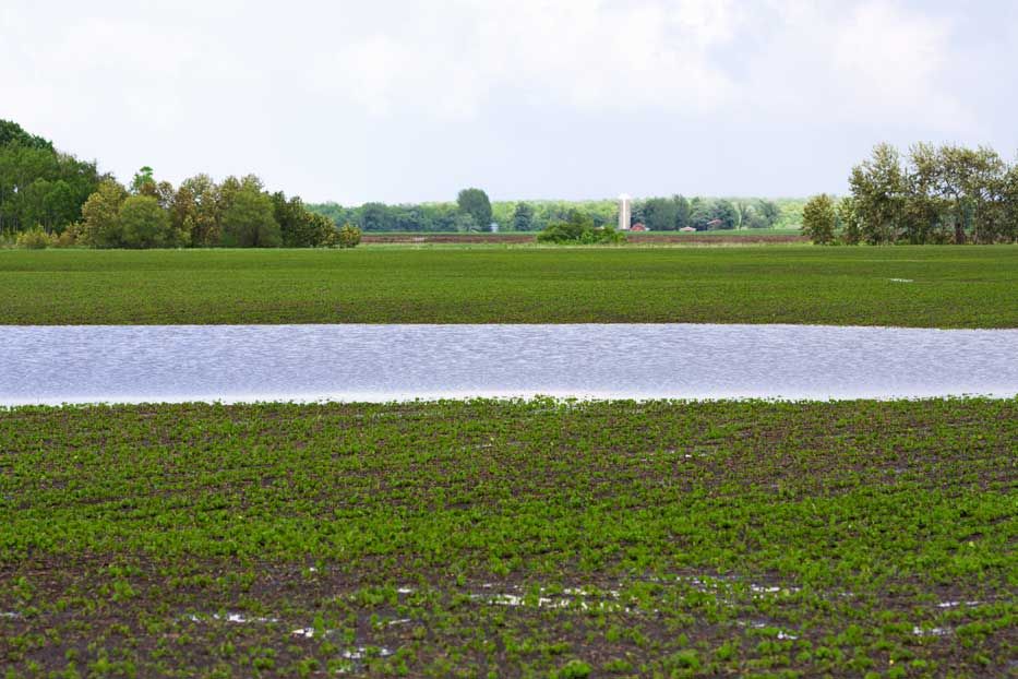 """Featured image for """"Farm fields and tiling …"""""""