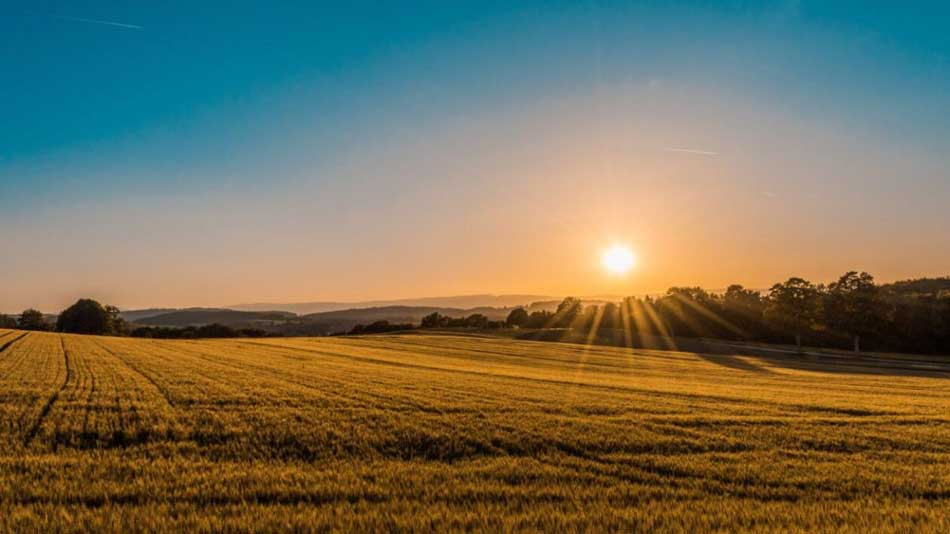 """Featured image for """"Farmland investing and the impact beyond the returns …"""""""