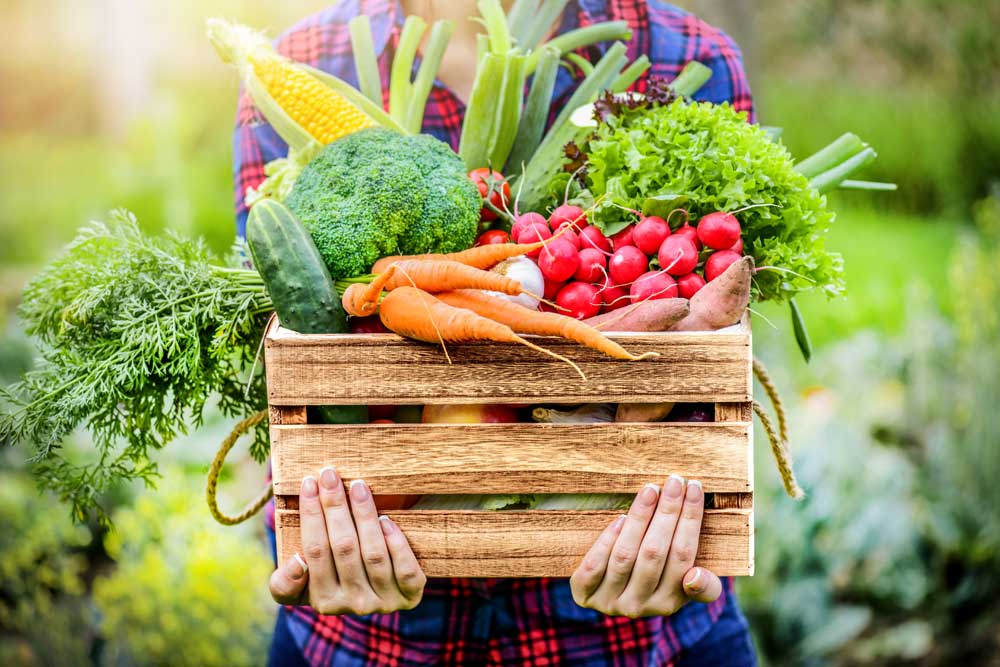 """Featured image for """"We know that eating a proper diet with fruits and vegetables is key to a healthy lifestyle."""""""